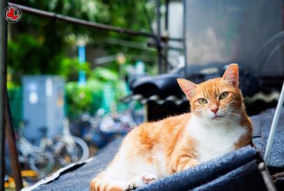 stray cat shelter