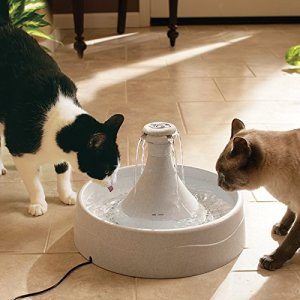 How to Keep a Cat from Knocking Over Water Bowls