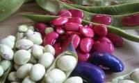 beans-338288_960_720