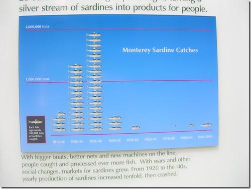 Monterey Sardine Catch