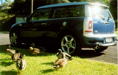 Mini Cooper S Clubman and ducks