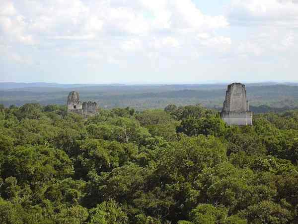 The tops of two pyramids peek out from the rainforest in Tikal