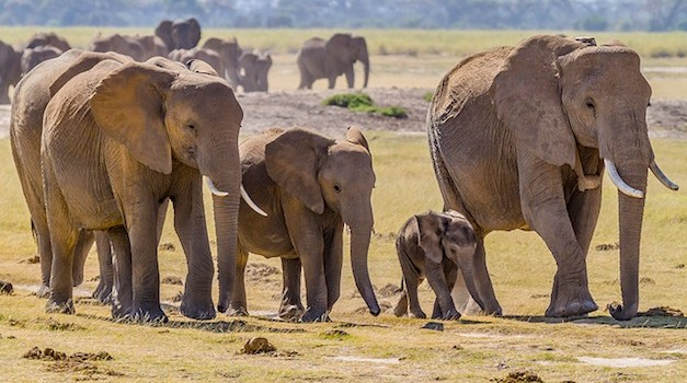 California Expands Ban on Ivory Trade With New Law
