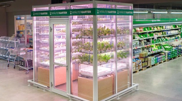 This German Supermarket Has a Vertical Farm to Offer Organic Produce