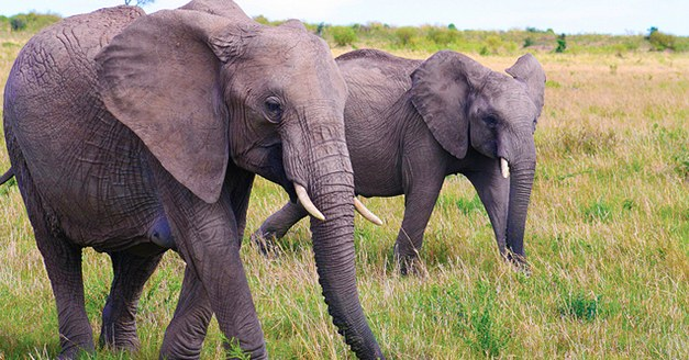 Tech Giants Pinterest, Microsoft Join Fight Against Illegal Online Wildlife Trade