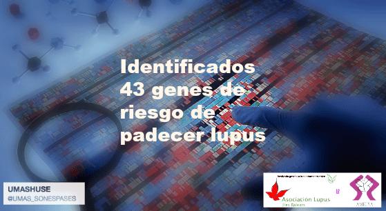 43 genes del lupus