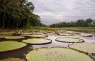 34-Aqua-Expeditions-Amazon-Cruiser-yatzer-photo-by-katerina-katopis