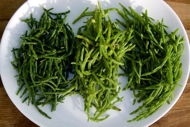 Assiette de salicornes