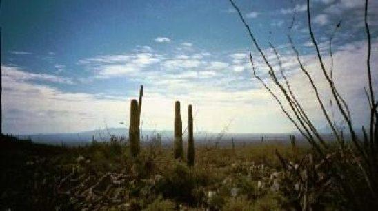 Arizona_Landscape4_SkywithCacti_Trees