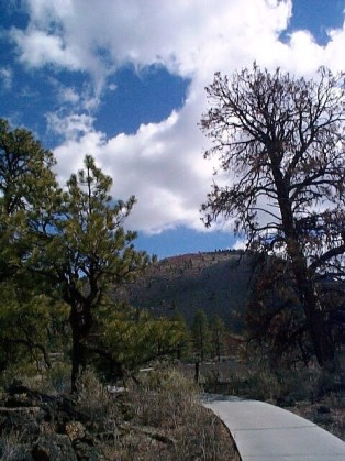 Arizona_Landscape_VerticalwithWalkPath