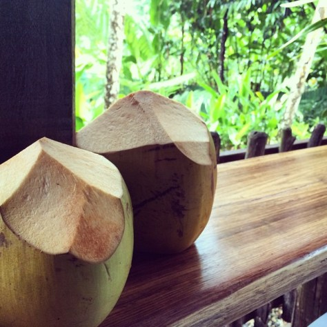 Coconuts in Kuranda