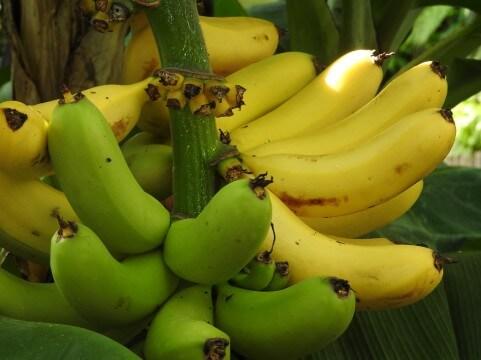 もんげーバナナは皮まで食べれるって?購入場所や値段や味は
