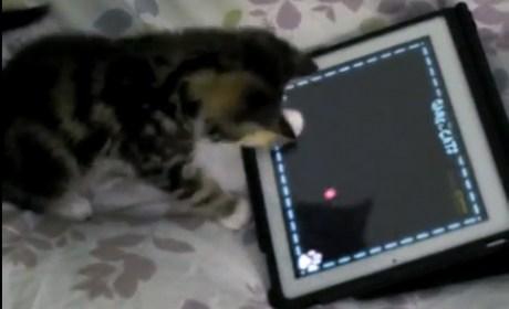 iPadCat