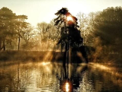 Reflectie van zon en boom in het water bij mist
