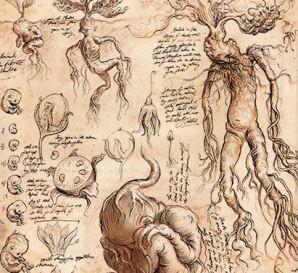 Arte conceitual das Mandrágoras (fonte: Bloomsbury)