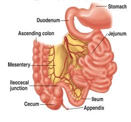 gejala penyakit usus halus