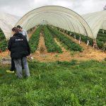 Erdbeertunnel schützen ebenfalls