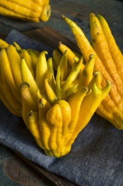 Yellow Organic Buddhas Hand Citrus Fruit with Fingers