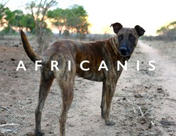 Small Of African Dog Breeds