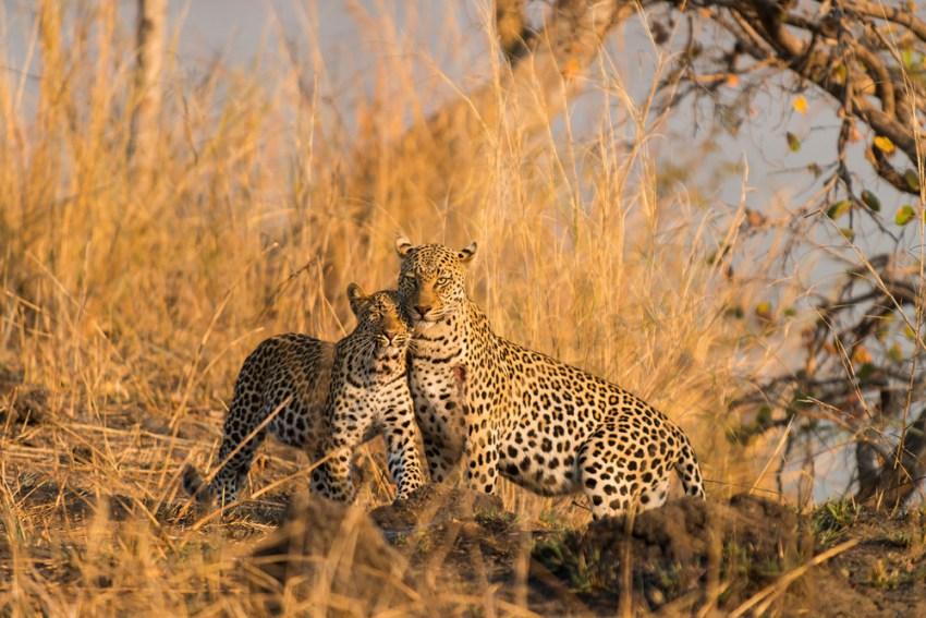 © Mukambi Safari Lodge