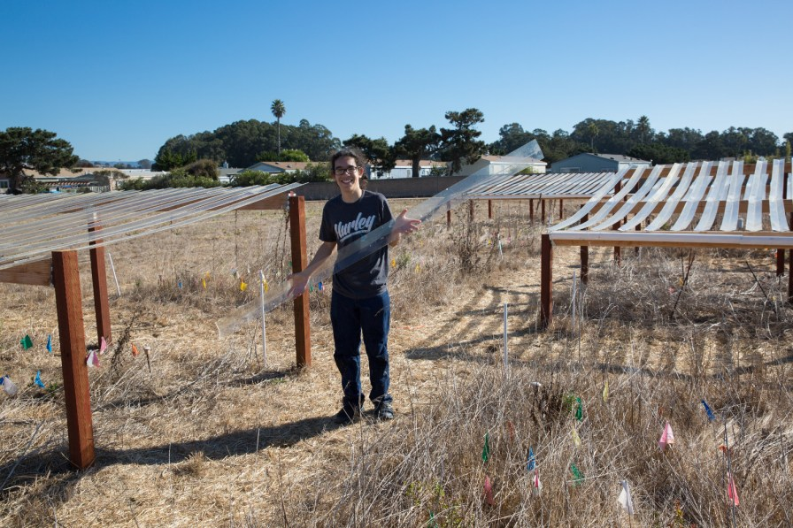 First-year student Mario Franco (Rachel Carson College, plant sciences) displays parts of the drought net structures students and interns are erecting in the Natural Reserve as part of the International Drought Experiment (Primary Investigator, Michael Loik, Department of Environmental Studies), which includes 45 sites around the world aimed at studying the effects of drought.