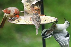 February is National Bird Feeding Month!