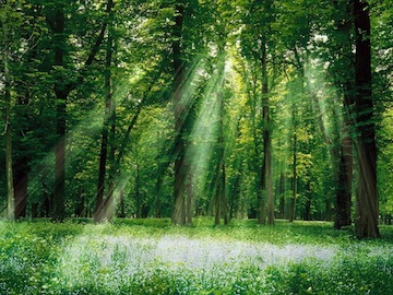 Magical_Forest