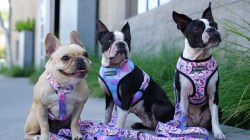 Small Of Best Harness For Dogs