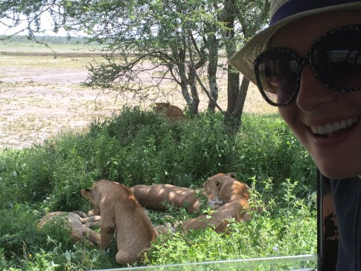 baby lions