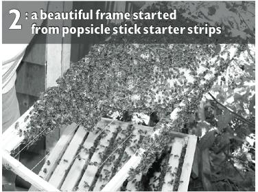(Photo 2) Popsicle Stick Starter Strips