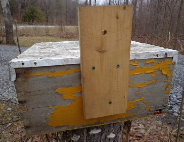 Back  view of a hivebody-style bait hive for catching swarms; the vertical board is for nailing and/or tying to a tree trunk or other structure. The hardware cloth on the front entrance is there to prevent mice from moving in. PHOTO: ANNE FREY