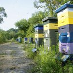 Myths of Beekeeping