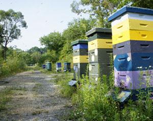 Myths of Beekeeping