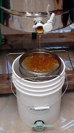 Summer Honey Harvest in Maine
