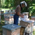 October 2015 – The Beekeepers Calendar