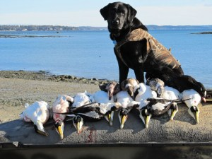 Maine Hunting Dogs