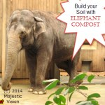 Buy Elephant Compost