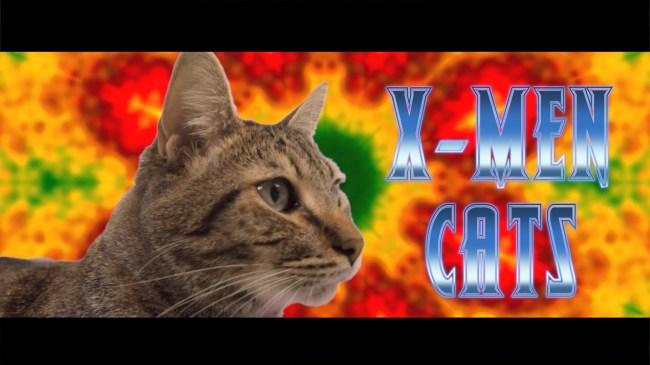 X-Cats Still 1