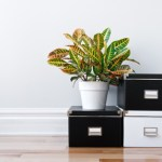 12 Organisational Solutions for Small Homes