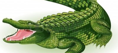 9716633-vector-illustration-of-a-crocodile-on-white-background-1-1394603910