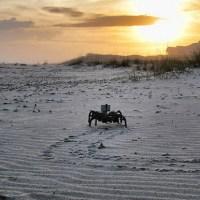 Hexapod sunset