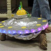 tortoise-costume-1