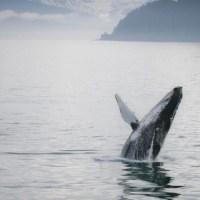 humpback_full