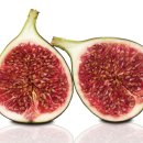 Cloning the Fig