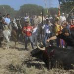 La Junta de Castilla y León prohíbe el 'Toro de la Vega'