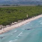 La Playa de Muro consigue por decimocuarta vez la bandera azul
