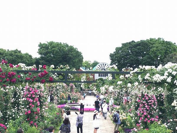 港の見える丘公園香りの庭20170524