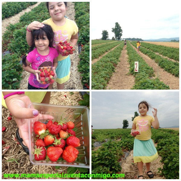 Frutillas en Nj