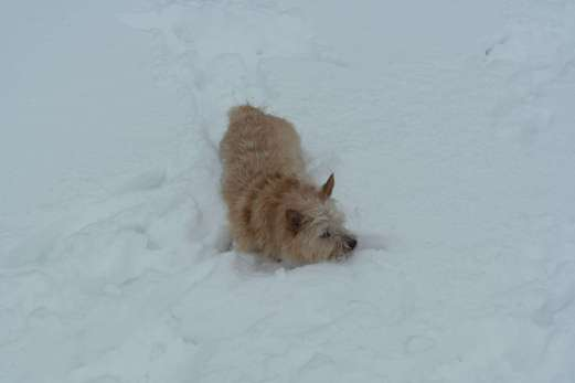 The snow was a bit deep for Homily's taste!