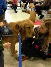 Comfort dogs are providing solace to those affected by the Newtown school shooting